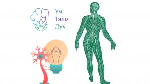 Защитаващата ни Майка – Нервната ни Система
