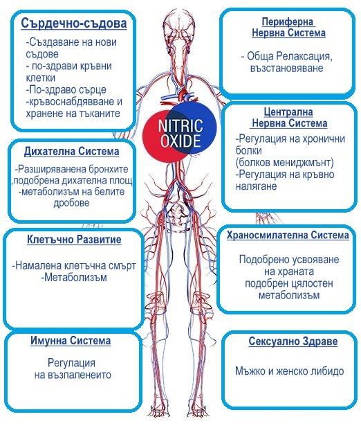 азотен оксид ползи