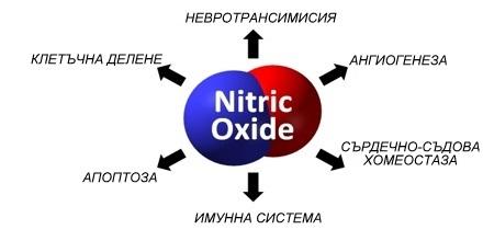 азотен оксид ползи дишане през носа