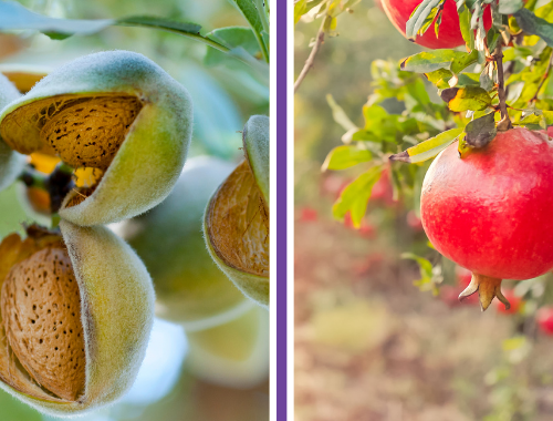 Плодови и ядкови дървета, бадемови дървета