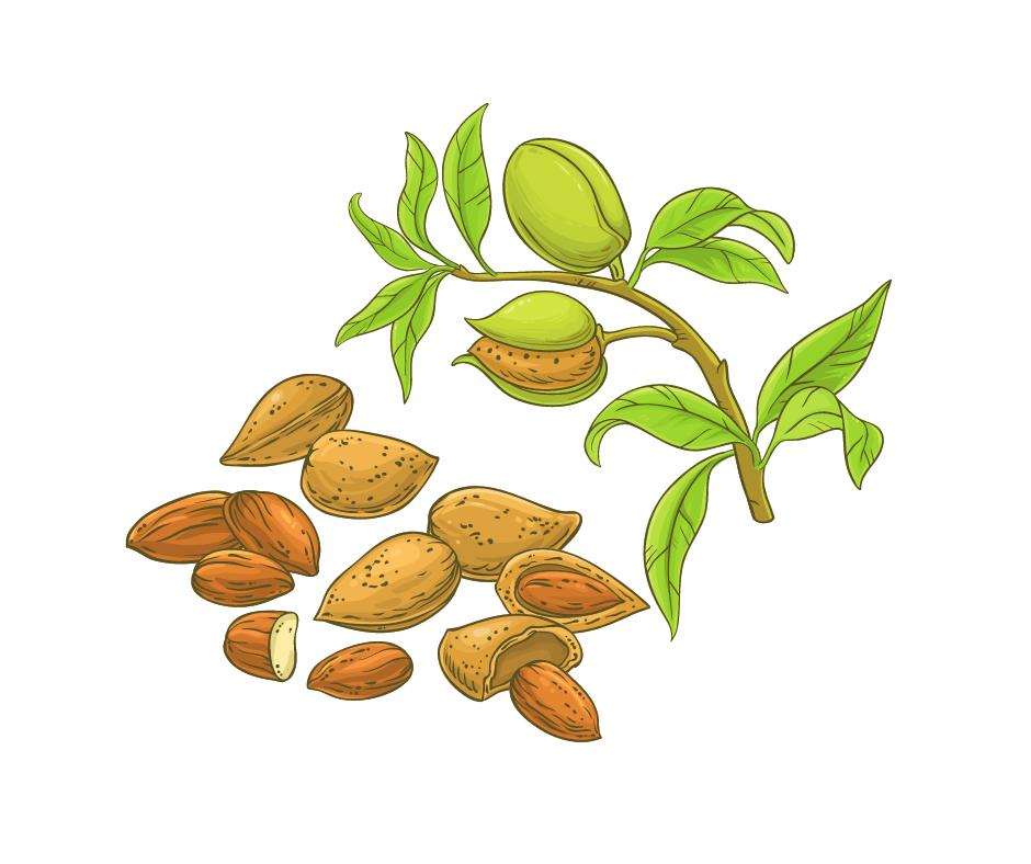 бадемови дървета, ядки
