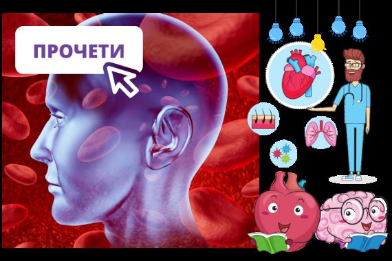 кръвооросяване мозък и сърце